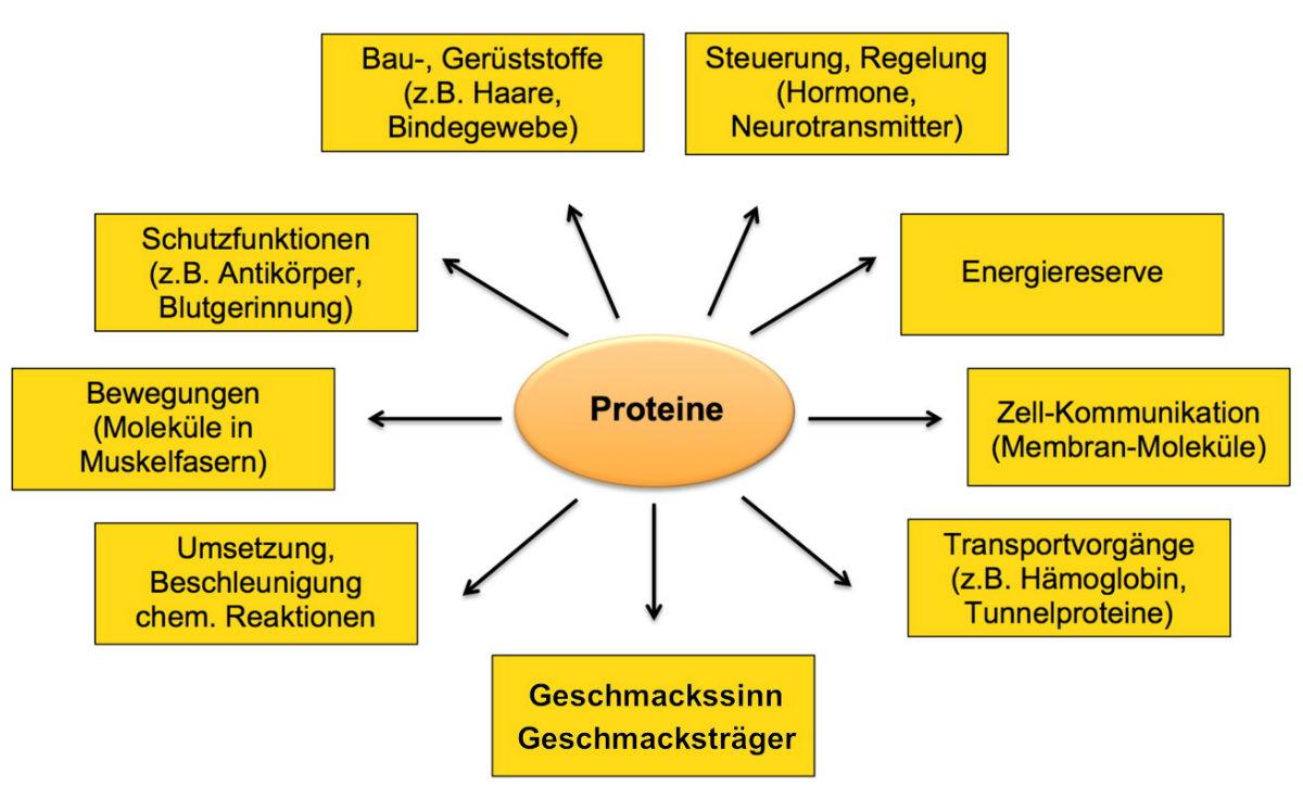Kap. 20.20 Proteine   das sind fast Alleskönner