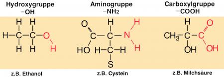 Enzym Gruppen
