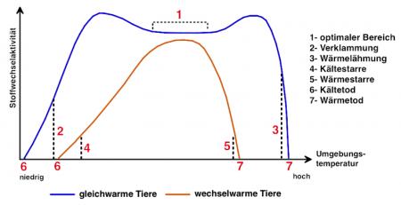 Enzyme Temperatur